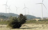 windmills200.jpg