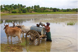 A farmer takes water from a pond in central Burma, October 2012.