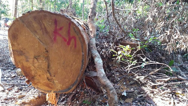 Illegally logged timber in Vireak Chey National Park, May 2018.