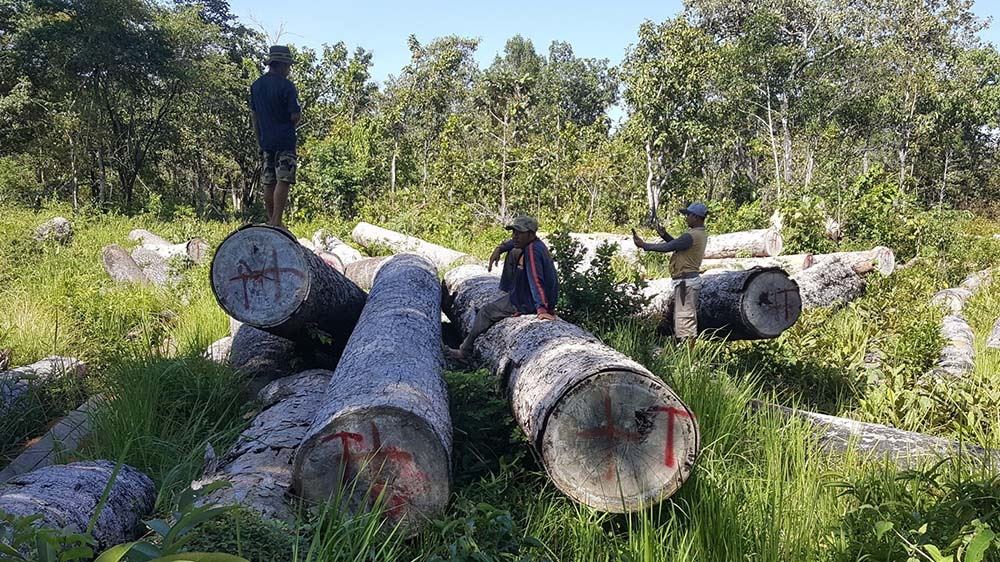 Activists document illegally harvested timber in Ratanakkiri province's Sesan commune, in an undated photo. Credit: Mother Nature