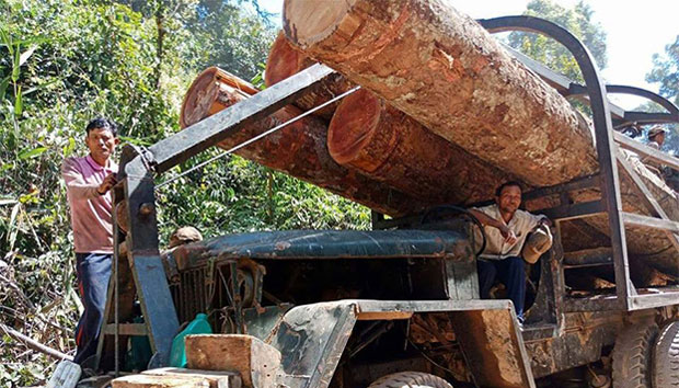 Illegally harvested timber is shown ready for transport to Vietnam from a national park in Cambodia's Ratanakiri province, March 2018.