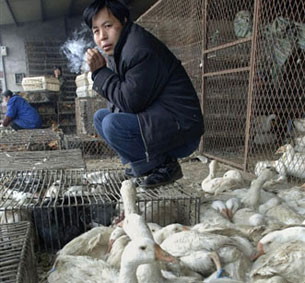 HEFEI, China: Poultry seller at a market in Hefei, Anhui province, on Feb. 26, 2008.