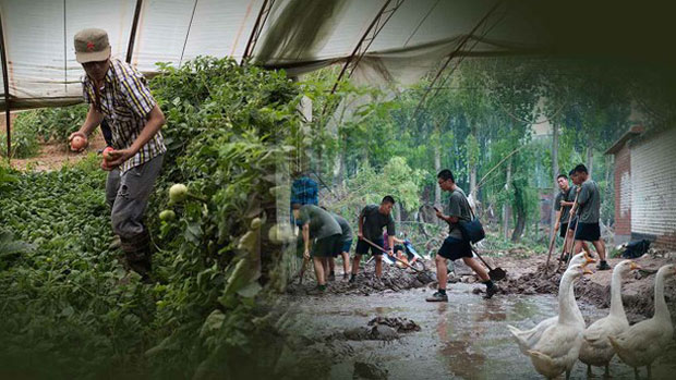 Chinese youth perform work in the countryside in a composite photo.