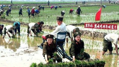 korea-farmwork-060520.jpg