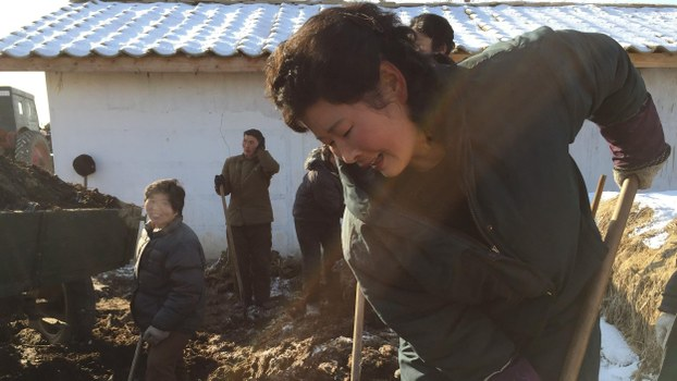 In this Monday, Jan. 23, 2017 photo, a farm worker digs into a pile of locally-produced Juche fertilizer at Migok Cooperative Farm near Sariwon, North Hwanghae Province, North Korea.