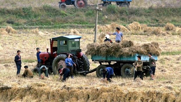 North Korean peasants work the fields near Pyongyang, North Korea, in a file photo.