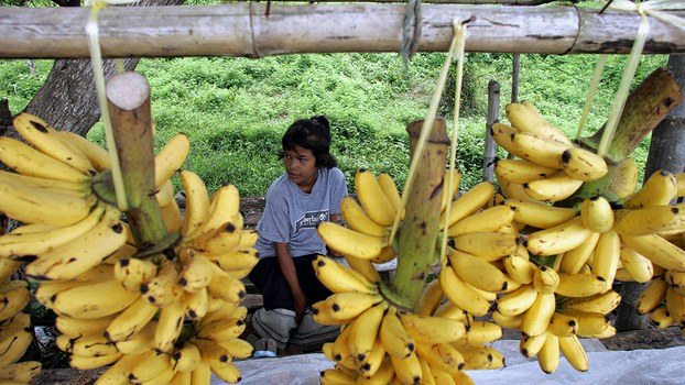A young Lao girl sells bananas at her family's roadside stall on the outskirts of Vientiane, in a file photo.