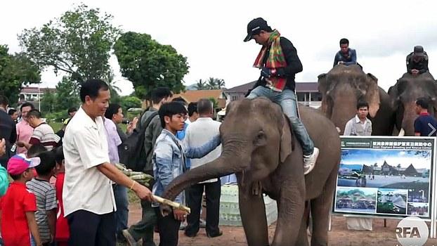 Elephants greet visitors at an event marking World Elephant Day in Xayaburi city, northwestern Laos' Xayaburi province, Aug. 12, 2017.