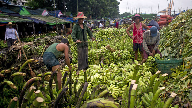 Myanmar laborers work at a banana market in the commercial city Yangon, Oct. 12, 2015.